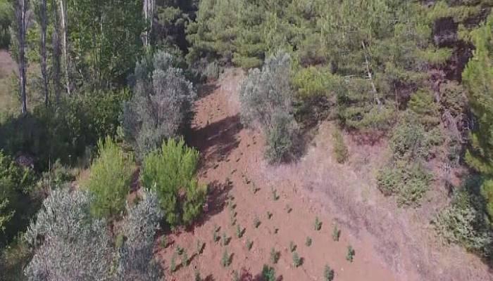 Jandarmadan drone'lu uyuşturucu operasyonu (VİDEO)