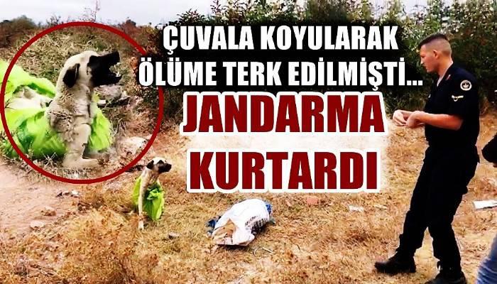 Vahşetin böylesi...Çanakkale'de, çuvala koyularak ölüme terkedilen köpeği jandarma kurtardı (VİDEO)