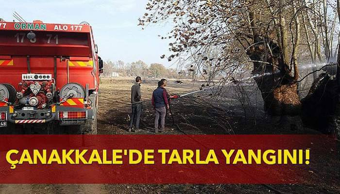Çanakkale'de tarla yangını!