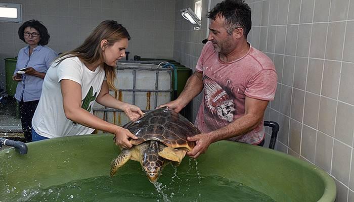Çanakkale'de 2 Deniz Kaplumbağası Doğal Yaşamına Döndü