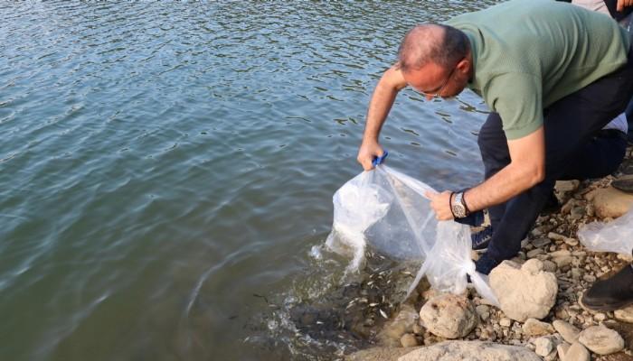 Çanakkale'de göletlere 250 bin pullu sazan balığı yavrusu bırakıldı (VİDEO)