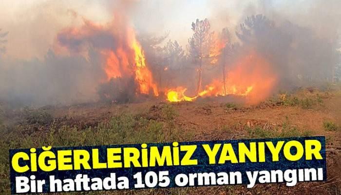 Ciğerlerimiz yanıyor |Bir haftada 105 orman yangını