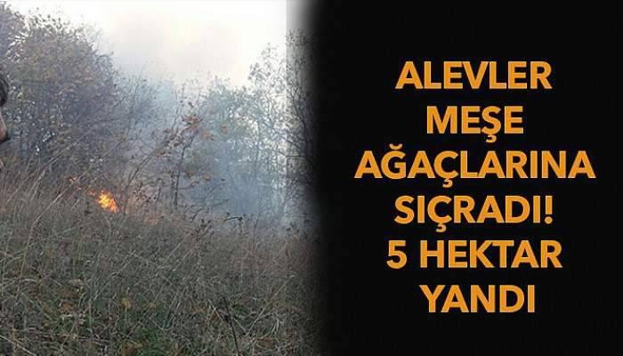 Alevler meşe ağaçlarına sıçradı! 5 hektar tarım arazisi yandı