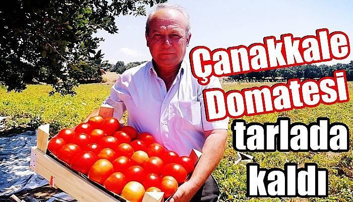 Çanakkale'de tarlada 50 kuruş, büyükşehirlerde 4-5 liradan satılıyor