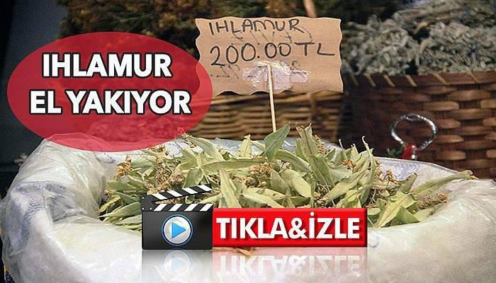 Çanakkale'de kilosu 200 lirayı buldu