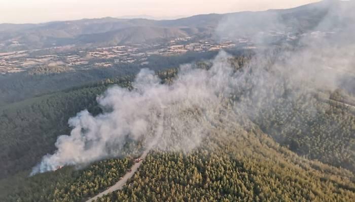 Lapseki'de orman yangını