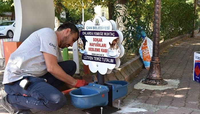 Çan Belediyesi'nden sokak hayvanları için duyarlı uygulama