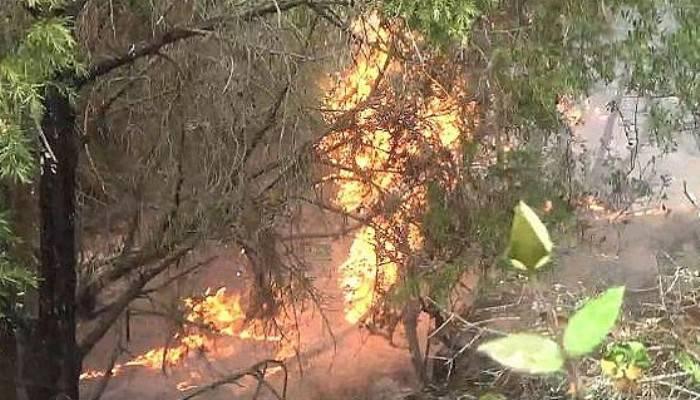 Çanakkale'de yıldırım düştü; 2 hektar alan yandı (VİDEO)