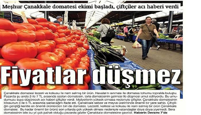 Meşhur Çanakkale domatesi ekimi başladı, çiftçiler acı haberi verdi