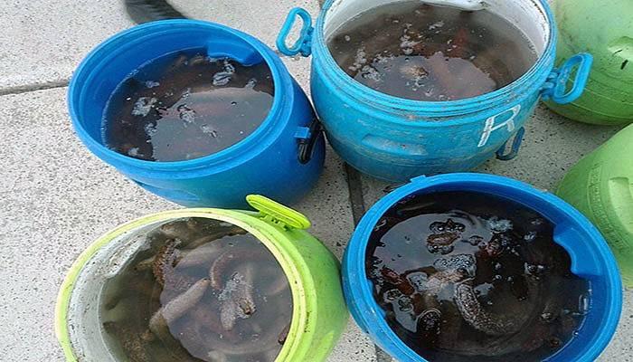 400 kilo deniz hıyarı ele geçirildi