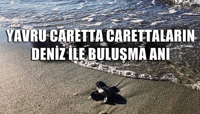 Yavru caretta carettaların denizle buluşma anı kamerada