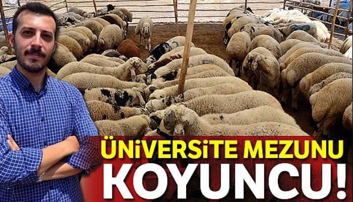 'Üniversite mezunu koyuncu'