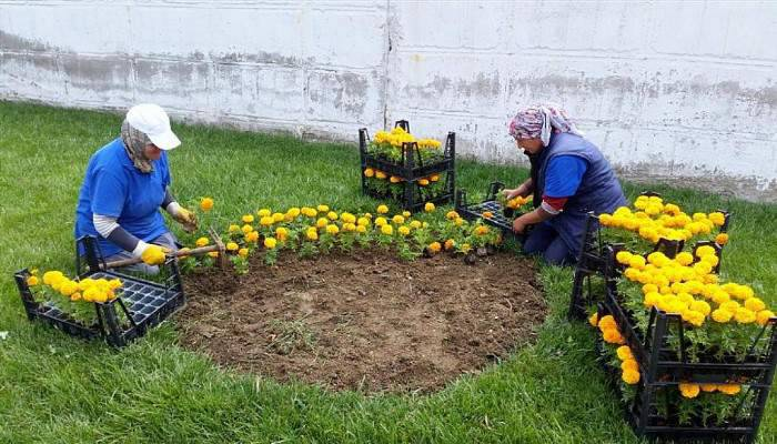 Gelibolu Çiçeklerle Güzel