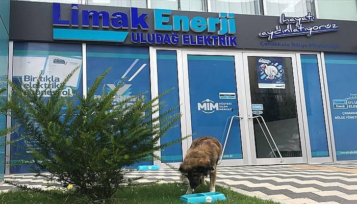 Limak Enerji yaz sıcaklarında sokak hayvanlarını unutmadı