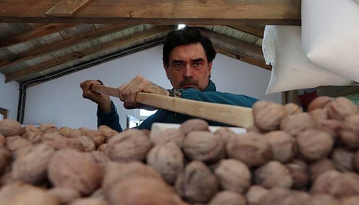 Huzuru köy yaşamında bulan ünlü oyuncu cevizlerini hasat etti