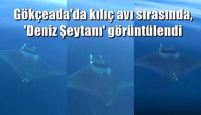 Gökçeada'da kılıç avı sırasında, 'Deniz Şeytanı' görüntülendi (VİDEO)