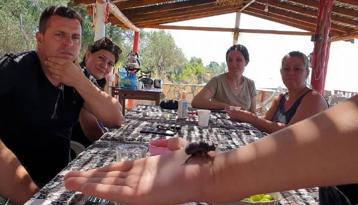 Kampta görülen Gergedan böceği, tatilcilerin ilgi odağı oldu