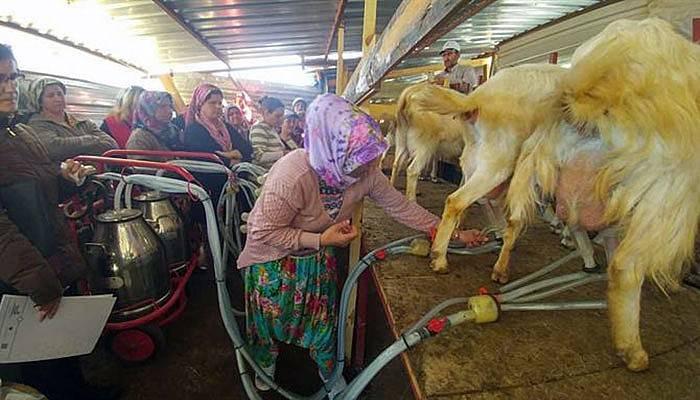 Köylerde 'Süt Hijyeni ' Kursu