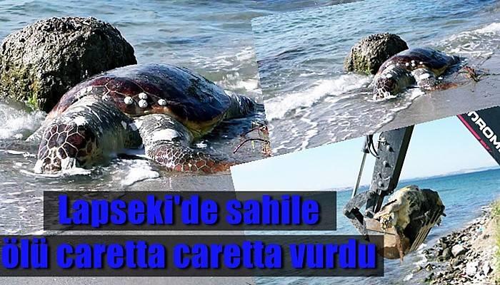 Lapseki'de sahile ölü caretta caretta vurdu (VİDEO)