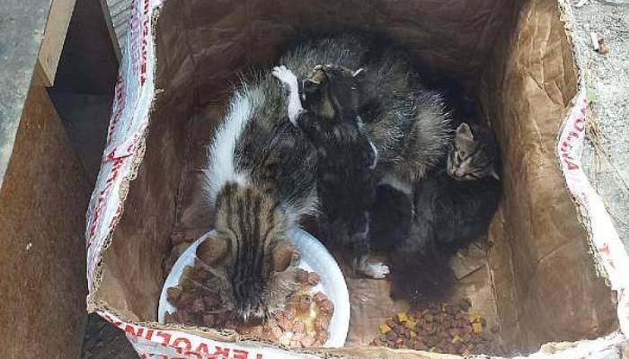 Kedi ve yavruları, ağzı telle bağlı kolide ölüme terk edildi (VİDEO)