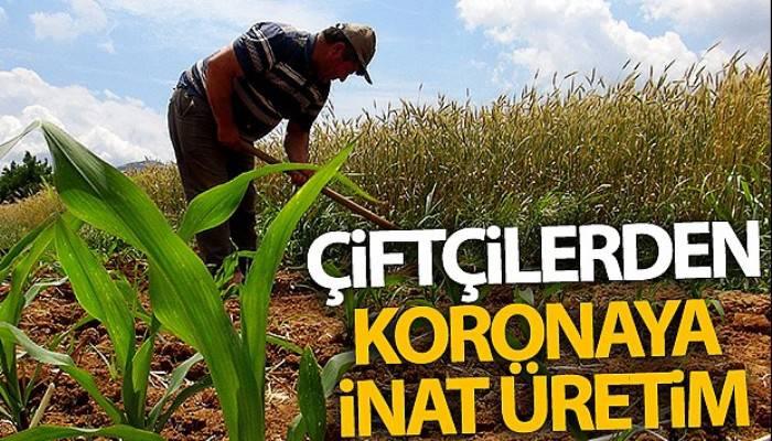 Çiftçilerden koronaya inat üretim