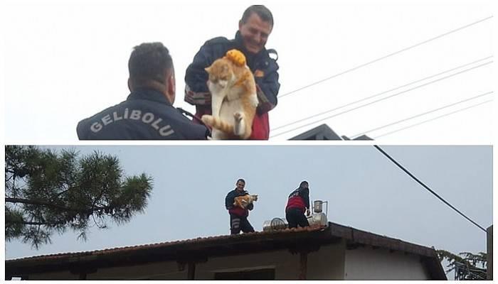 Yazlığın çatısında mahsur kalan 20 kiloluk kediyi itfaiye kurtardı