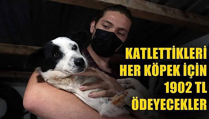 Katlettikleri her köpek için 1902 TL ödeyecekler (VİDEO)