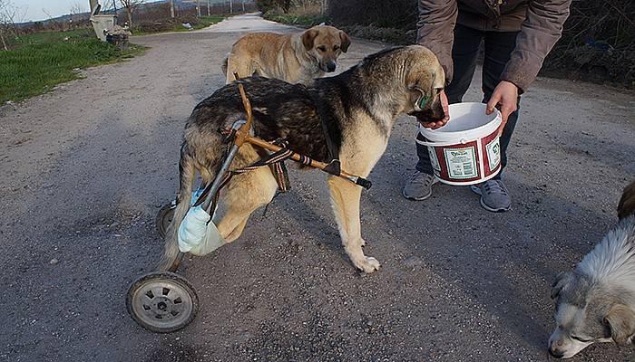 Araba çarpan köpeğe pazar arabasından yürüteç (VİDEO)