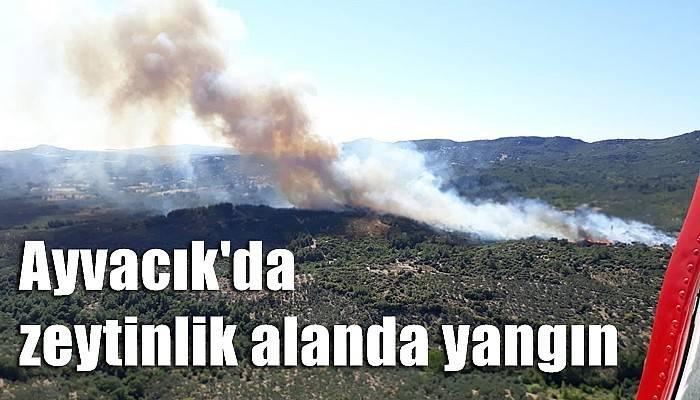 Çanakkale'de bir yangın daha