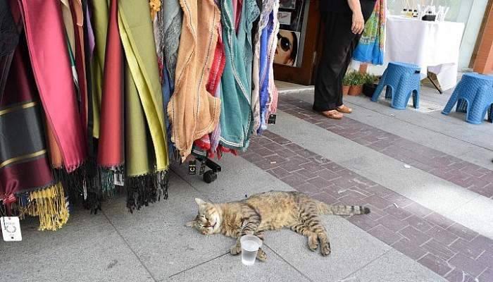 Sıcaktan bunalan hayvanların imdadına vatandaşlar yetişti