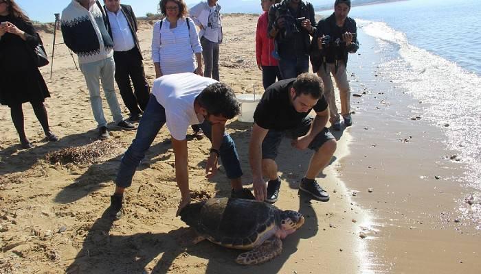 Caretta Caretta Dilek Denize Bırakıldı(VİDEO)