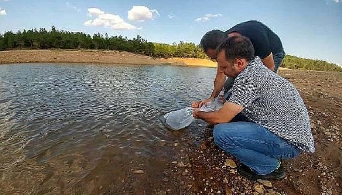 Çanakkale'de 9 gölete 105 bin yavru sazan balığı salındı