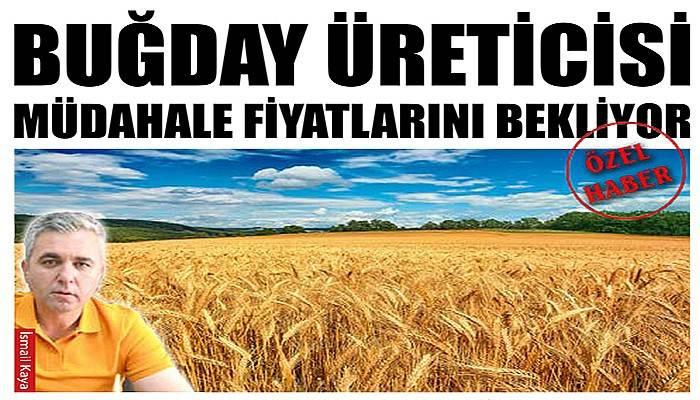Buğday üreticisi müdahale fiyatlarını bekliyor (VİDEO)