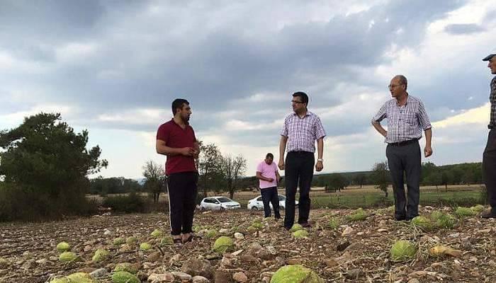 Milletvekili Öz, dolu yağışından zarar gören tarım arazilerini inceledi