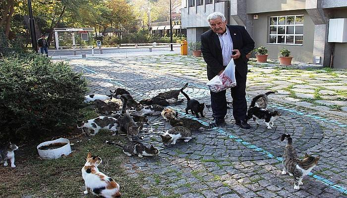 Kediler her sabah onu bekliyor
