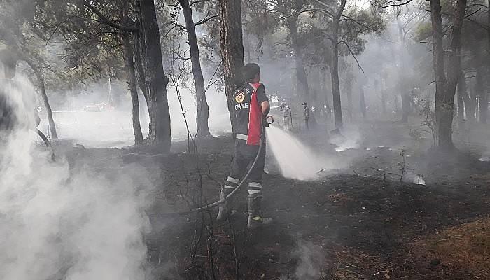 Bayramiç'te orman yangını: 20 dönüm alan kül oldu (VİDEO)