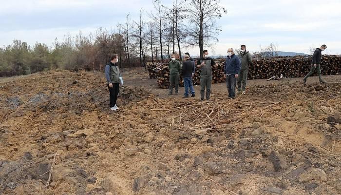 Ilgardere yangın sahası yeşil örtüsüne kavuşacak