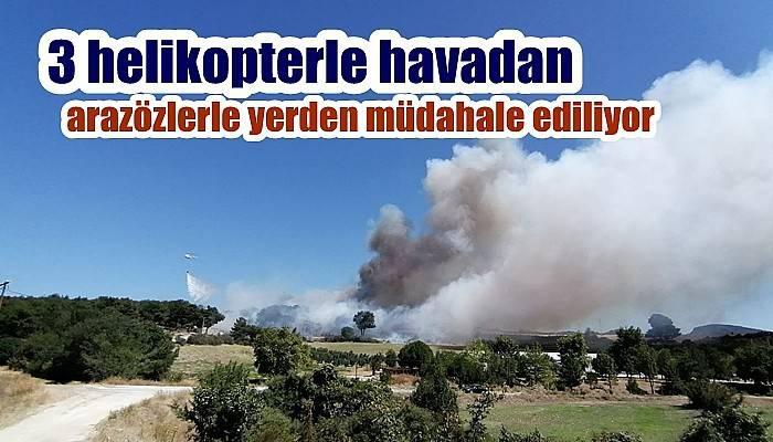Çanakkale'de orman yangını (VİDEO)