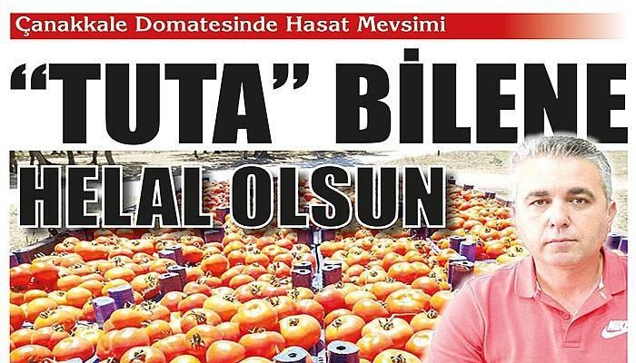 Çanakkale domatesinin hasadı başladı (VİDEO)