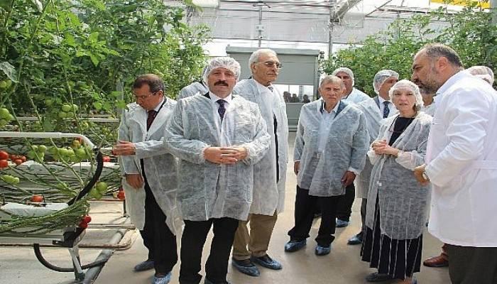 Türkiye'nin fabrika baca atığı ile ısıtılan ilk modern serası hizmete açıldı