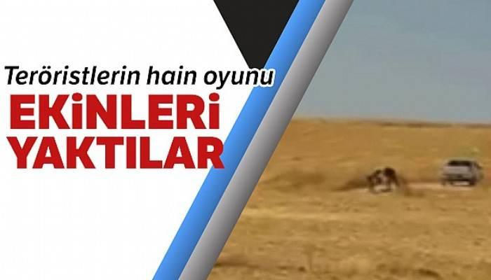 PKK/PYD terör örgütünün halkın ekinlerini yakma anı görüntülendi