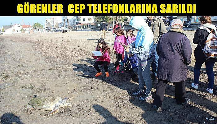 Çanakkale sahiline ölü caretta caretta vurdu