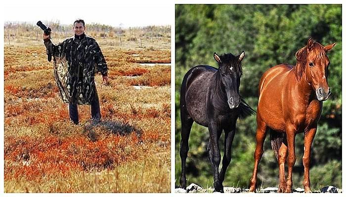 Ender görülen yılkı atlarını fotoğrafladı