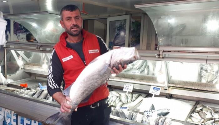 Çanakkale Boğazı'nda 7 kiloluk levrek yakaladı