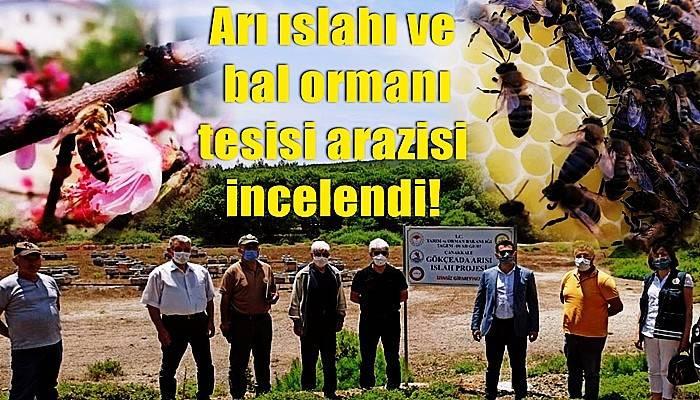 Türkiye'de ilk olacak Gökçeada arısına bal ormanı tesisi
