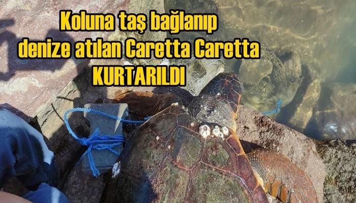Koluna taş bağlanıp denize atılan Caretta Caretta kurtarıldı! (VİDEO)