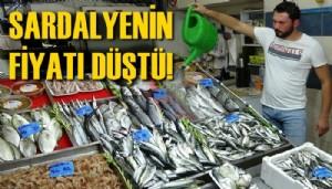 Çanakkale'de av sezonu açıldı, sardalyanın kilosu 35 liraya düştü (VİDEO)