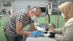 Bursa'da sokak kedisine kök hücre tedavisi