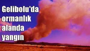 Gelibolu'da ormanlık alanda yangın (VİDEO)