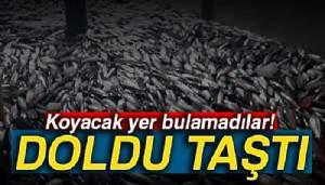 Kasalar dolusu balıklarla limana dönüyorlar